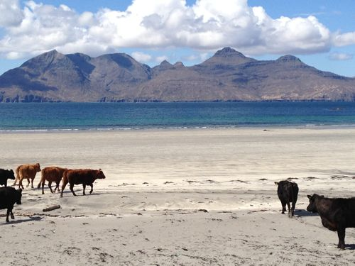 view of cloud topped rum with cattle on beach in foreground