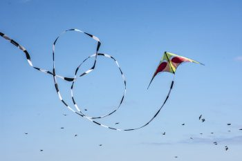 A flying kite among birds in a clear blue sky: Jan Mosiman CC BY-ND 2.0
